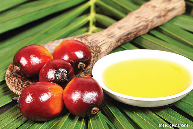palm kernel and oil
