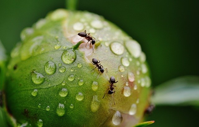 ants in plant